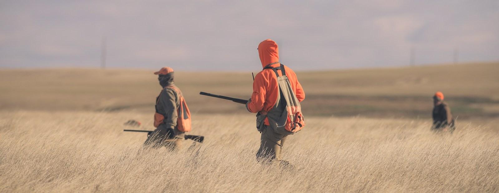 Three pheasant hunters hunt through a field