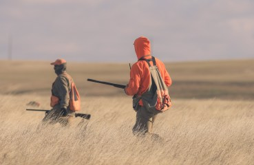 Three pheasant hunters hunt through a field
