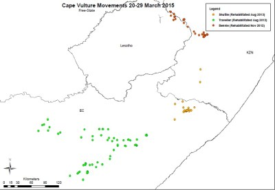 2015-03-20-29-south-africa-cape-vulture-satellite-tracking-map