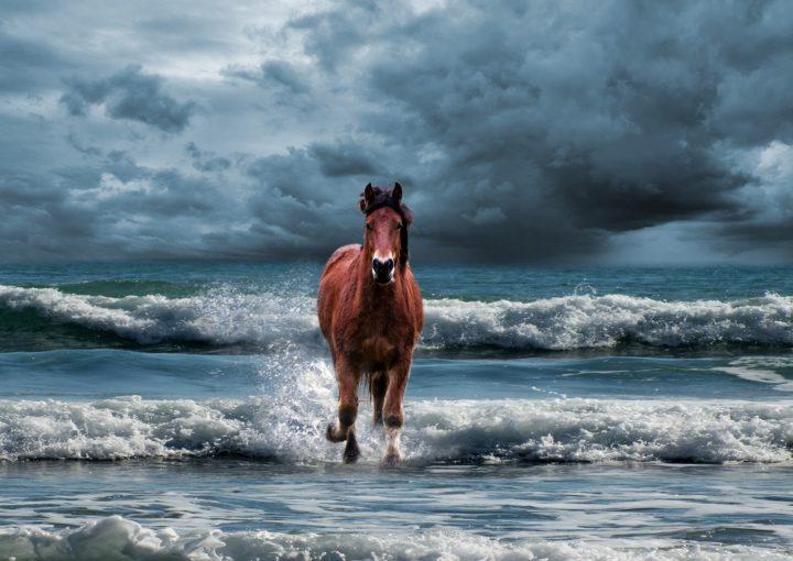 Zdrowy jak koń-definicja zdrowia