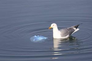 Le plastique… pas si fantastique : Ecologie