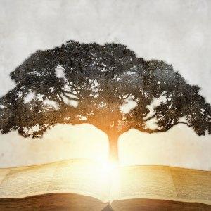 Enseigner, écrire, développer sa conscience…