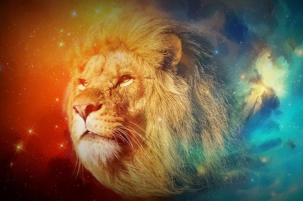 lion et 4 saisons