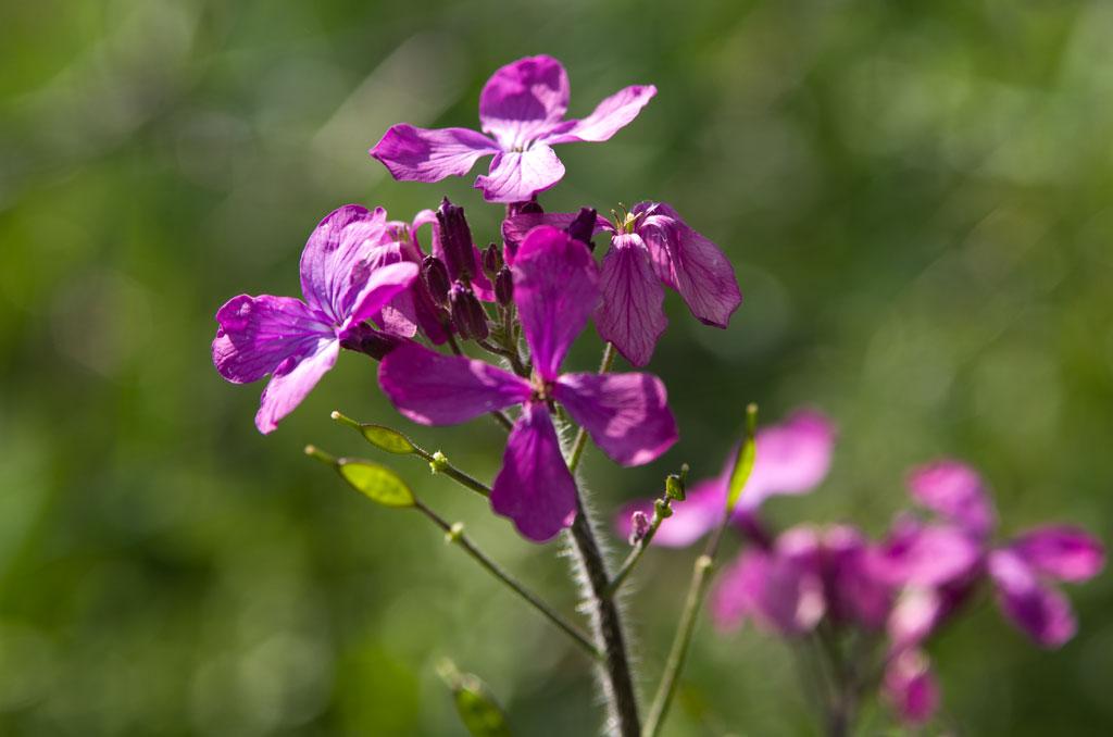 fleur-hygiene-vie-nature