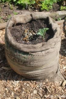 Création d'un bag garden. On peut planter des plante au-dessus et même percer des trous sur les côtes pour faire un mini-jardi vertical