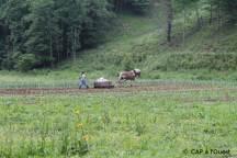 Ramassage des pierres grâce au cheval