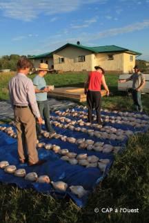 Distribution des poulet à la communauté
