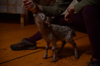 Un agneau abandonné par sa mère que nous avons nourri pendant tout notre séjour. Nous l'avons nommé Walter.