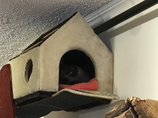 gato dormindo no Cat Café em Quebec