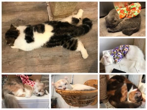 Gatos dormindo no Cat Cafe