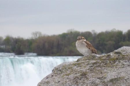 Como ir de Toronto a Niagara Falls e o que ver nas Cataratas no inverno