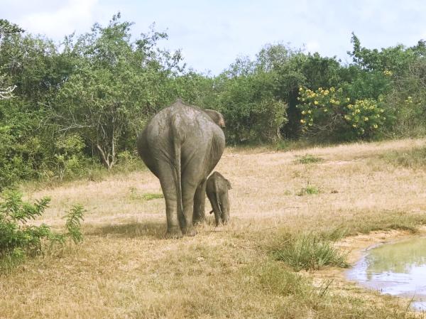 Familia de elefantes