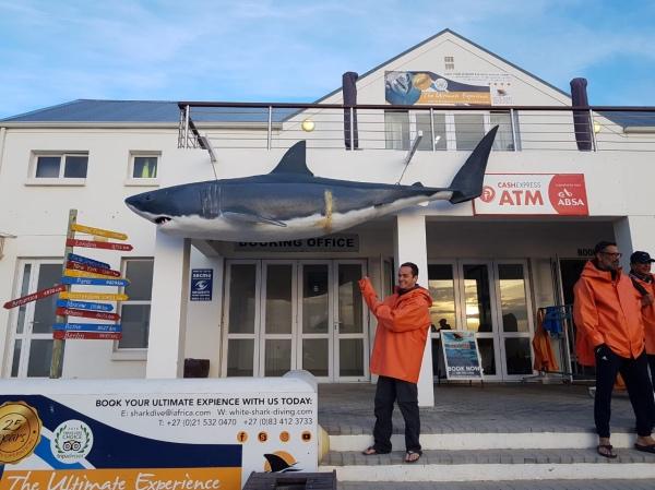 Empresa de mergulho com tubarão branco