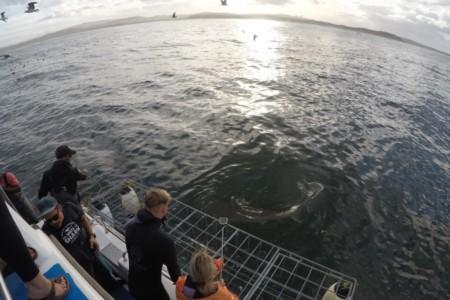Mergulho com tubarão-branco na África do Sul: valeu a pena?