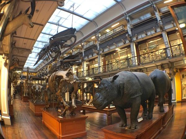 Museu da história Natural Dublin