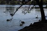 27.09.2013 - Parque Ibirapuera - Agner - Parque Ibirapuera (389)