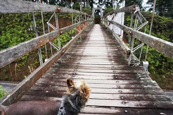 ViraVolta, Volta ao Mundo, Viagem pelo Mundo, Viagem Longo Prazo, Mochileiros, Viagem com cachorro, Viajar com seu cachorro