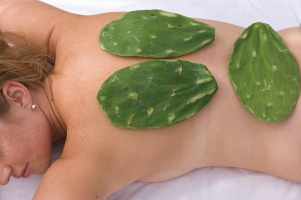 Eigenschaften des rohen Kaktus zur Gewichtsreduktion