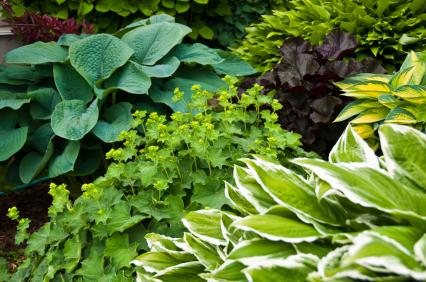 shade gardens landscaping tips