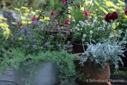July jam pan flower pot