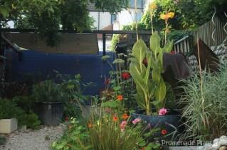September dahlias and nasturtiums