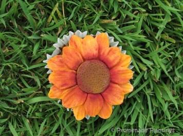 Devon sunflower cupcake