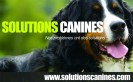 SolutionsCanines