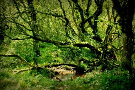 ©P.Romero: The New Forest, UK (2009)