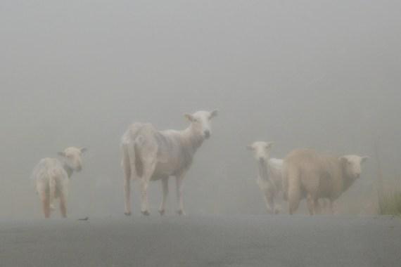 ©P.Romero: Dense Fog. North Wales (2016)