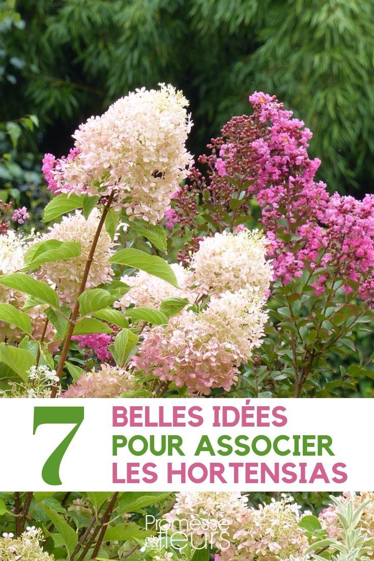 Comment Avoir Des Hortensias Rouges : comment, avoir, hortensias, rouges, Hortensia, Bonnes, Idées, L'associer, Jardin