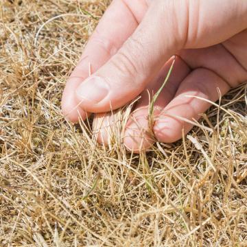 dealing with dead grass