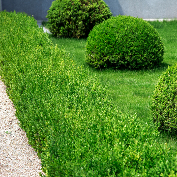 facts on hedge trimming