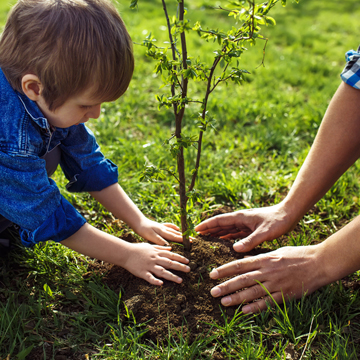 fall is best time to plant tree