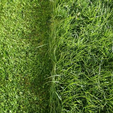 grass cutting 101