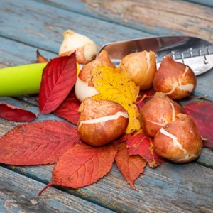 make the most of fall landscape