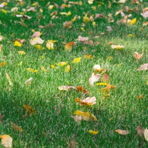 recover lawn from summer
