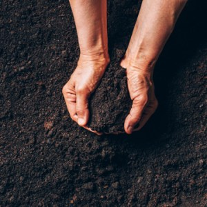 what to know about soil