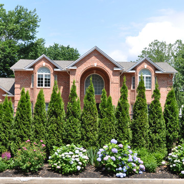curb appeal with tree services