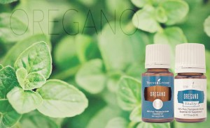 Young Living Oregano & Oregano Vitality Essential oil bottles in front of an Oregano plant