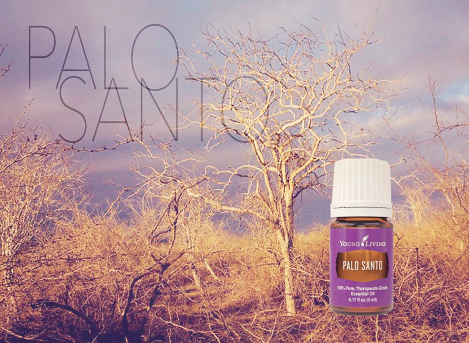 Palo Santo essential oil- Young Living bottle in front of a Palo Santo Tree. Promise Life Blog