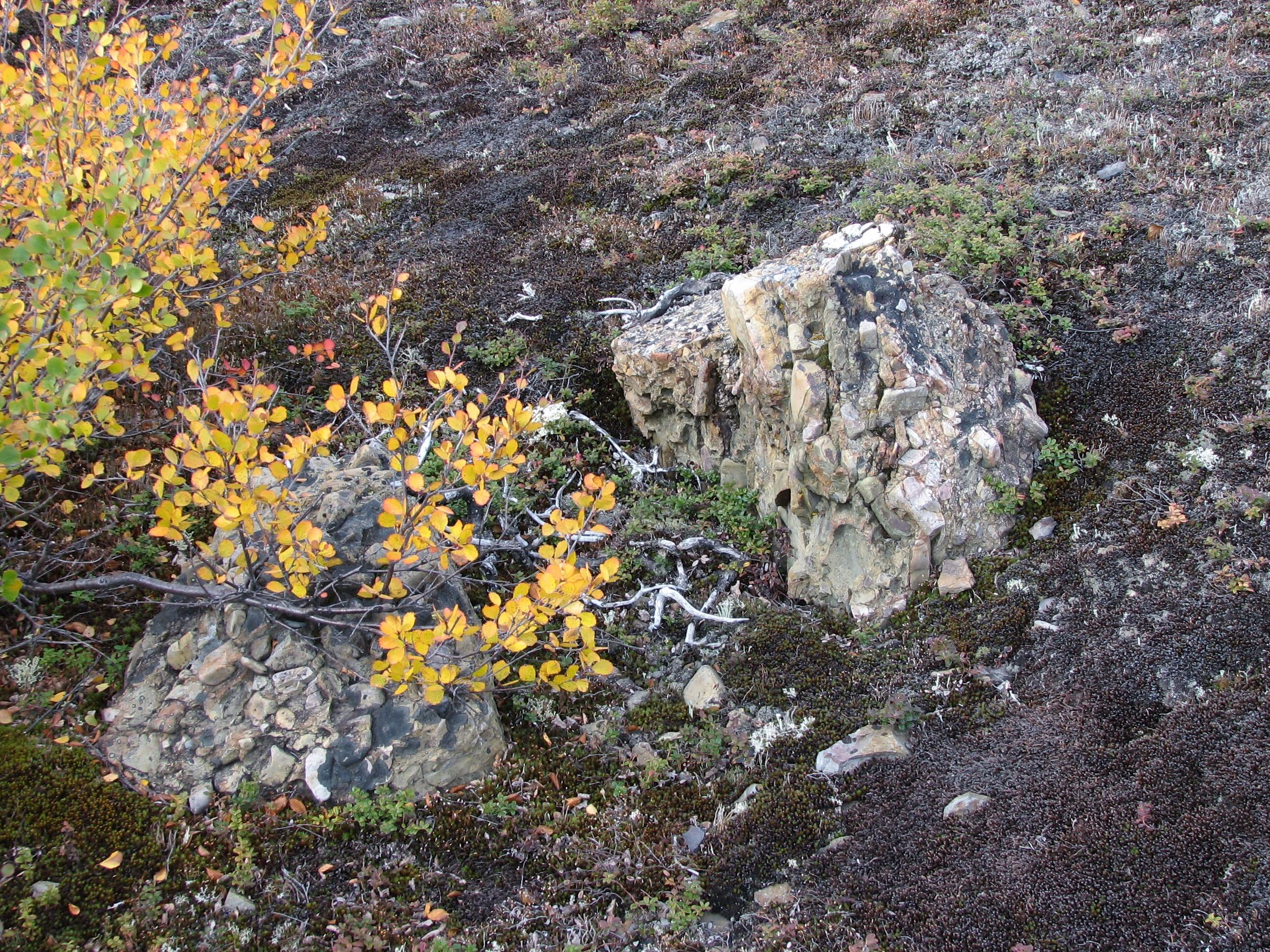 Yukon: Two rocks showing breccia material