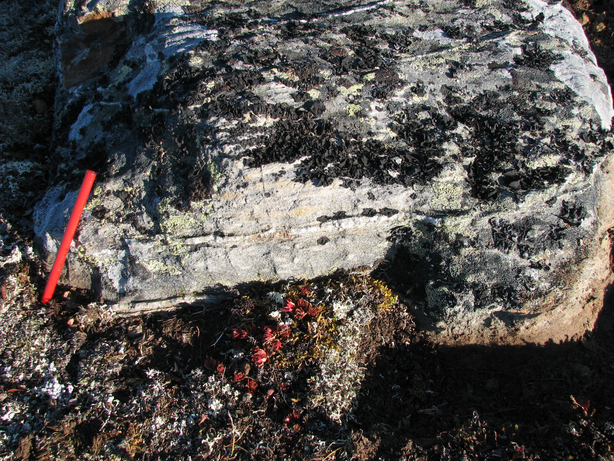 Yukon: Rock covered in vein material