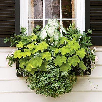 caladium, holly fern, heuchera, lamium, ivy, and pink periwinkle