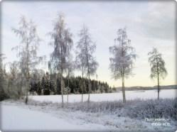 StockholmRund
