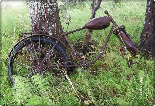 Rost 4- Moped