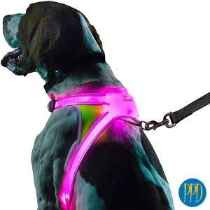 LED light up pet harnesses.Keep your pets safe with LED light up pet harnesses. Perfcet for brand identity for pet stores and pet products. Customized logo or private label available. Promotional Product Direct.