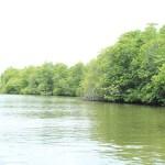 sri lanka tour itinerary - Madu River Boat Ride through Mangroves - View 8