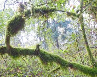 Fall moss (Photo © 2017 by V. Nesdoly)