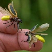 firefly (tanka)
