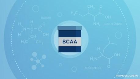 Комплекс аминокислот BCAA: для чего он нужен в бодибилдинге